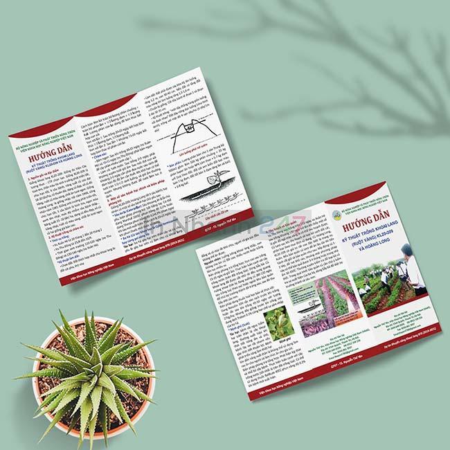 Tờ gấp 3 kỹ thuật trồng khoai